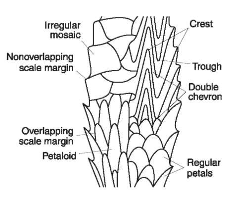 Scale terminology and patterns. The scale patterns on the hair of wild animals vary greatly between different families of animals and sometimes along the length of a single hair. These patterns can be visualized when the surface scales are reproduced with a cast or viewed with a scanning electron microscope.