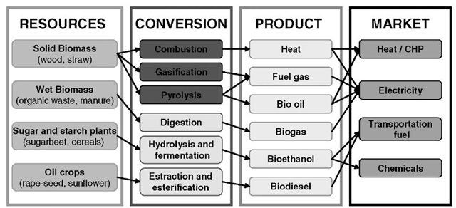 Processes to convert biomass into useful energy, i.e., bioenergy.