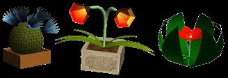 Verschiedene Pflanzen 003
