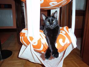 Trapecio para gatos P7080011