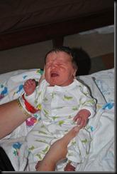 cullens birth 271