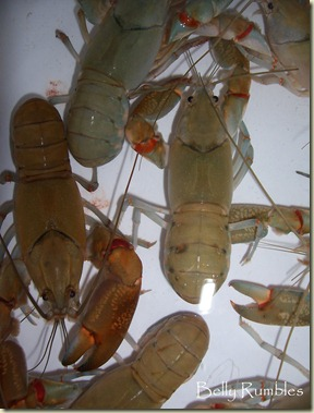 yabbies 2