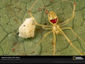 แมงมุมยิ้ม