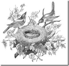 birdclipsketch