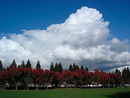 memorial park, cupertino.