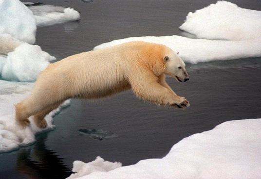 oso elpepusoc_10