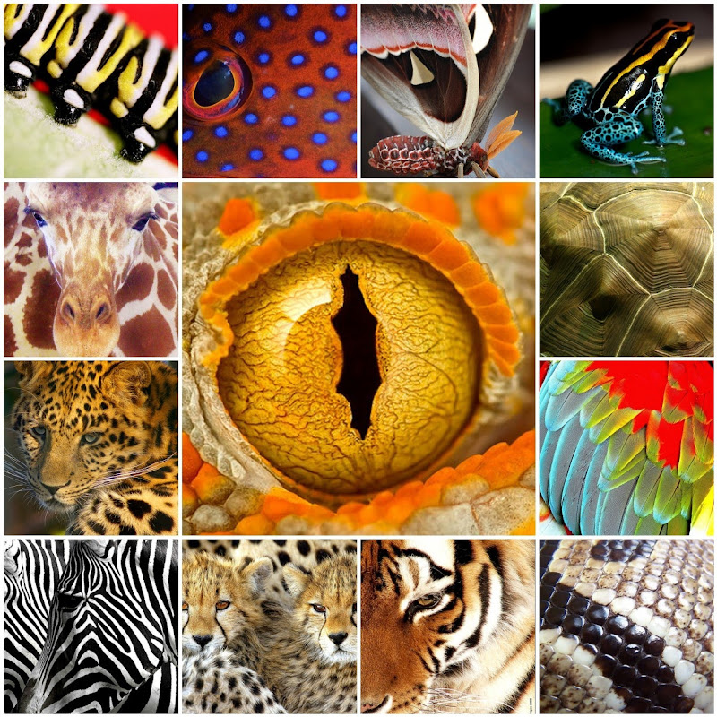 Wild Prints Animal Collage