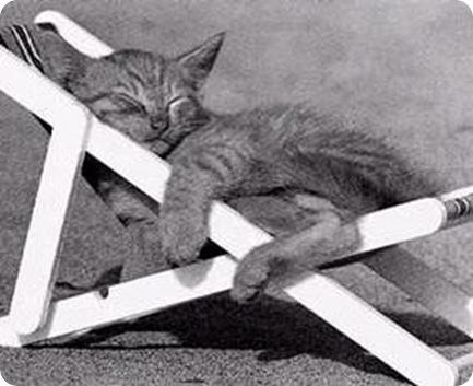 gattino sulla sdraio