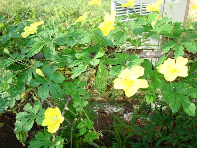Khu vườn của Na DSC01611