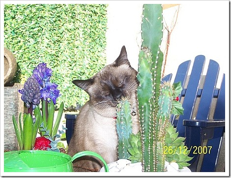 Cat Eating Cactus.