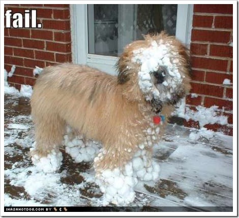Funny dog picture | Dog with snow on his face.