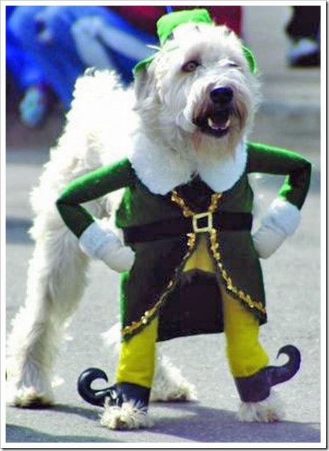 http://lh3.ggpht.com/_2VEaTPMR9yw/SpArodQ1aoI/AAAAAAAAAYY/jfNCo5XiHmA/funny_dog_costume%5B2%5D.jpg?imgmax=800