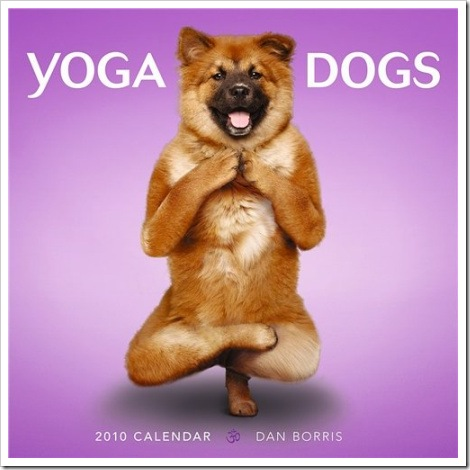 Super funny picture - Dog doing yoga.