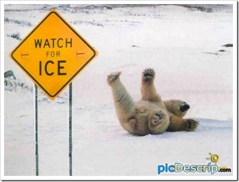 polar_bear_fail