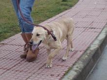 NEFER, DUNA, BOBY 28 ENERO 2011 012