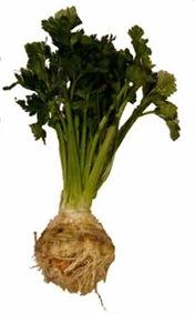 celery-root