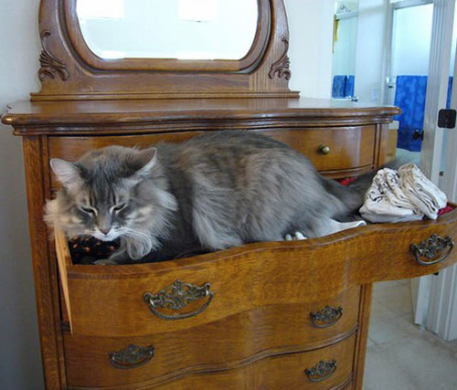 In a Drawer Organize Kitties8.jpg