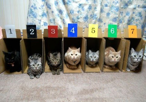 Organize Kitties by number.jpg