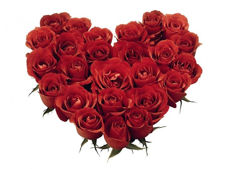 Arti di balik warna bunga mawar, arti dari mawar kuning, mawar merah, putih, lavender, ungu, oranye, pink, lambang cinta