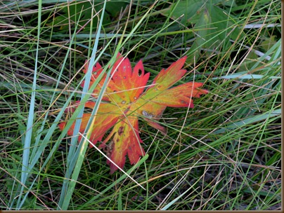 Early fall leaf