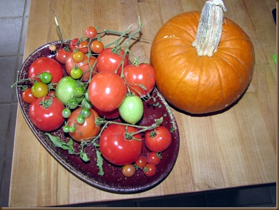 My tomato crop