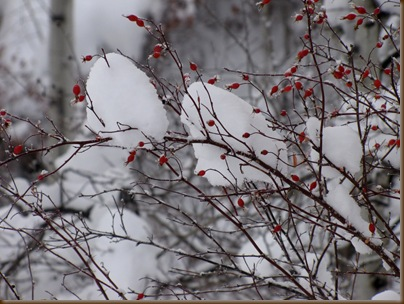 Rose Hips and snow