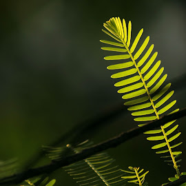 by Tharanga Jothirathna - Nature Up Close Trees & Bushes