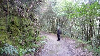 Der verzauberte Wald im Parque Rural de Anaga.