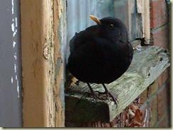 window sill bird