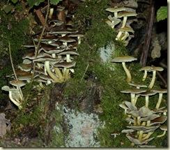 fungus 16