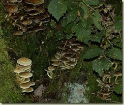 fungus 19
