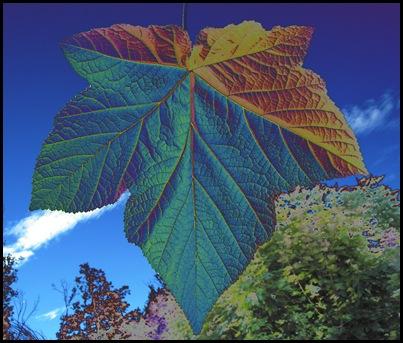 Blått blad