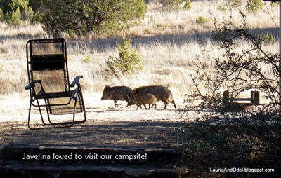 Javelina family jogging through Site 16