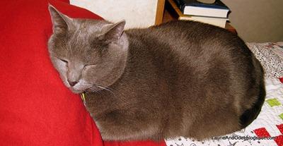 Sleepy Luna enjoys the new flannel pillowcase.