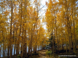 Path through Aspens