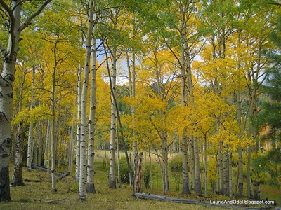Aspen on Boulder Mountain