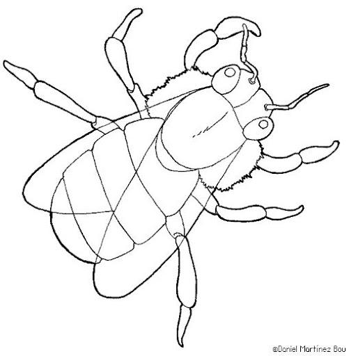 Dibujos de animales invertebrados para imprimir y colorear - Imagui