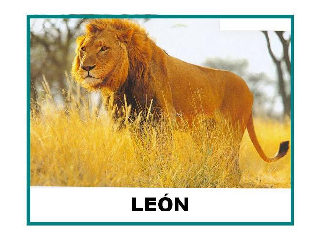 El leon ficha infantil for El jardin leon