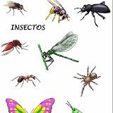 09. Insectos.jpg