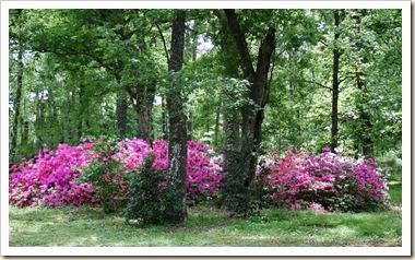 azaleas photoshopped