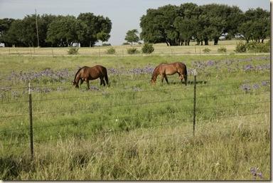 bluebells horses