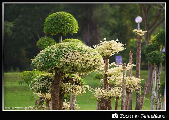 Bonsais at Batu Buruk garden picture