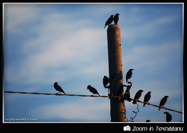 flock of crows picture