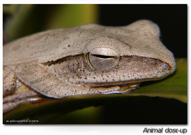 frog close up picture