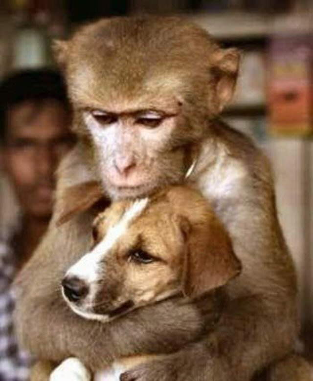 Funny Friendship Look how animals can make friends, monkeys with dogs, tigers with pig, whatever!......