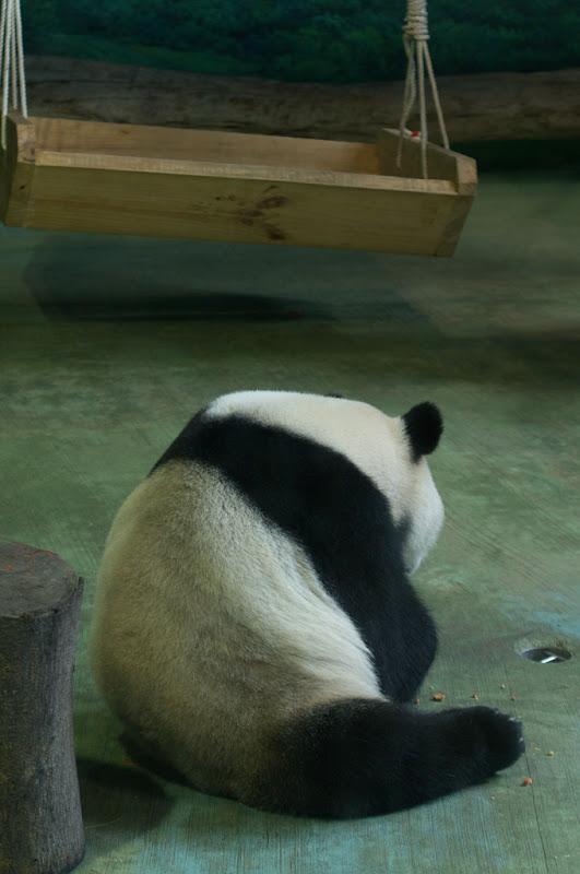 木柵動物園二