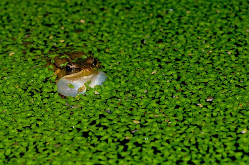 蛙...哇.....挖