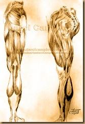 musculos pernas 001