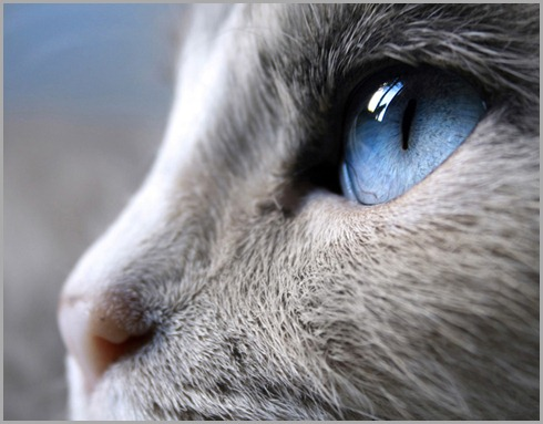 blue-eye-996831