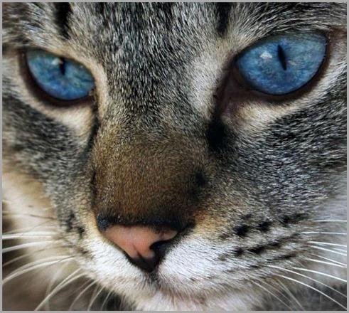 gato-guapo